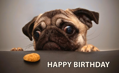 top 30 cute happy birthday meme dog birthday wishes quotes